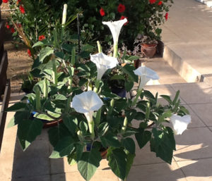 feature-gardening-Plant of the month