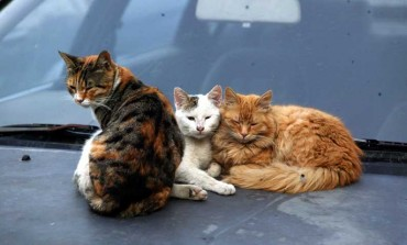 Authorities mull neutering programme for strays