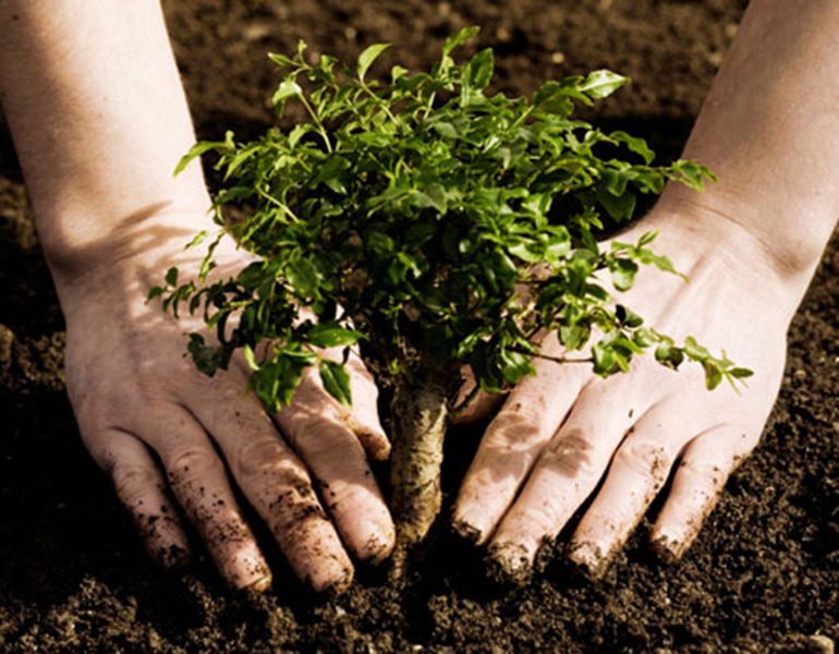 tree planting initiative seeks volunteers cyprus mail