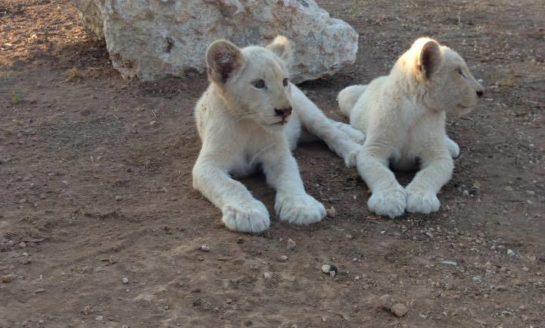 Kouyialis issues decree on exotic animal imports