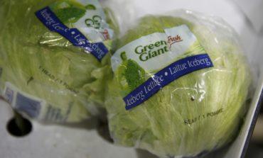 UK supermarkets ration iceberg lettuces due to supply crunch