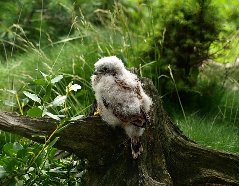 Public warned not to 'rescue' baby birds