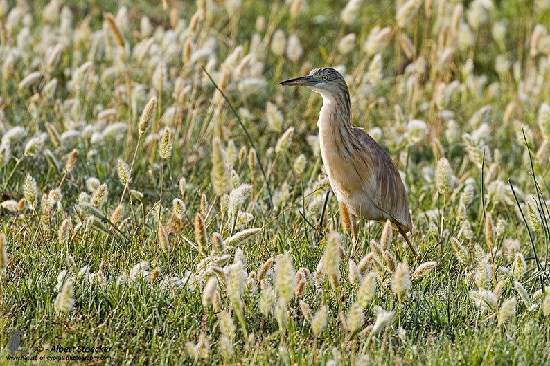 BirdLife Cyprus celebrates completion of Akrotiri marsh project
