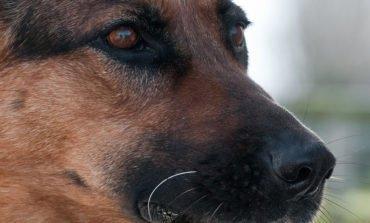Animal Party outraged at lenient sentence for dog killer