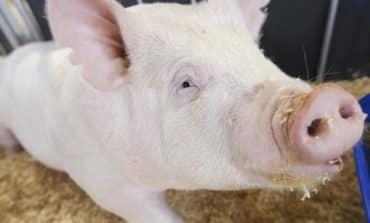 Tiny Utah firm regenerates skin and hair in pigs