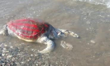 Condemnation of brutal killing of turtle
