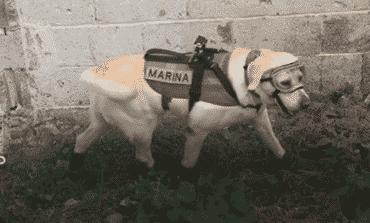 Frida: the rescue dog of Mexico