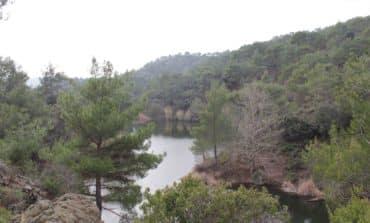 Conservationists concerned over forest development