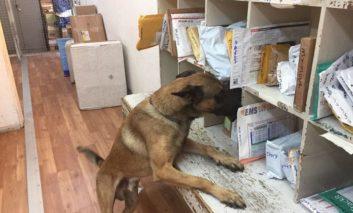 Drug squad investigates THC find in Limassol