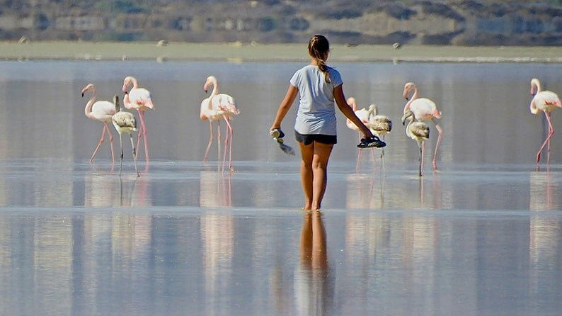 Appeal to leave migrating flamingos in peace