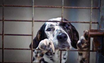 Animal Party welcomes dog registration scheme