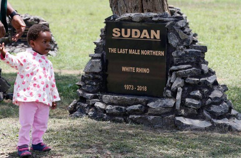 Kenyan minister urges life sentences for ivory possession