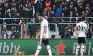 UEFA fine Besiktas after cat stops Champions League match