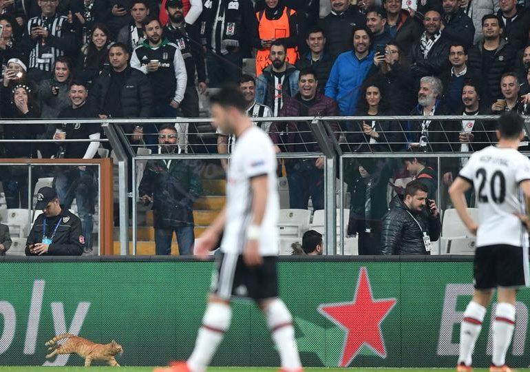 UEFA fine Besiktas after cat stops Champions League match