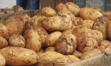 'Potato crisis' also seen in the north