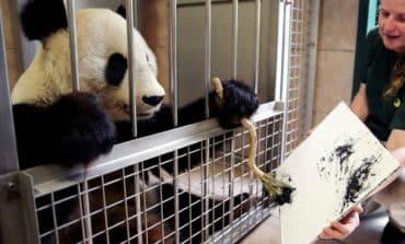 Cuddliest artist in Vienna, panda's paintings go on sale