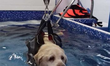 First canine hydrotherapy centre in Paphos opens
