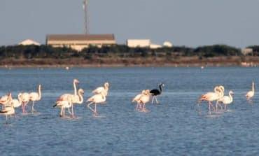 'Walking a fine line' on Larnaca's salt lake