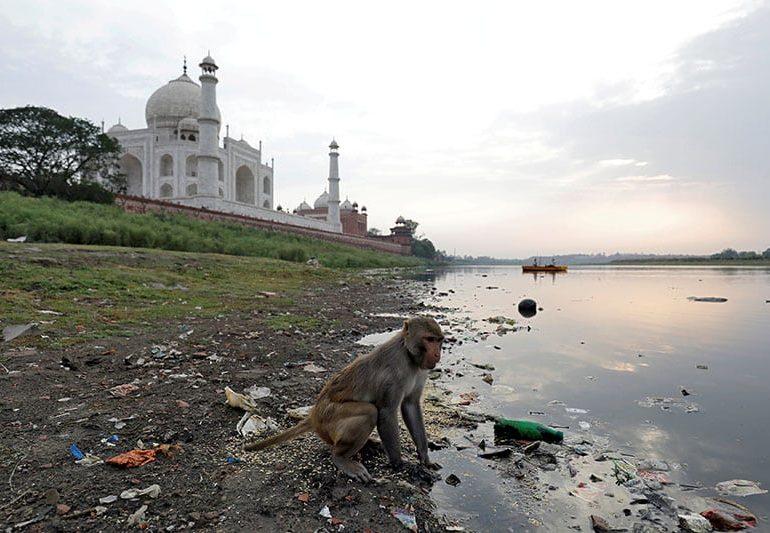 Taj Mahal police take aim at marauding monkeys with slingshots (V)