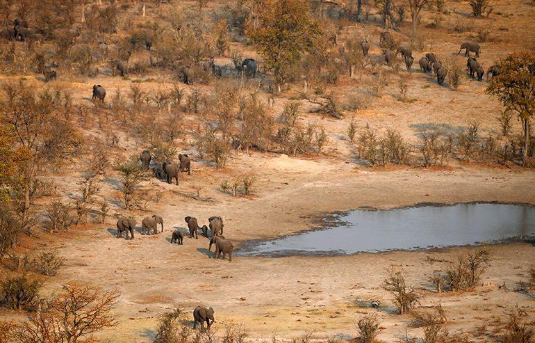 Botswana considers allowing culling elephants