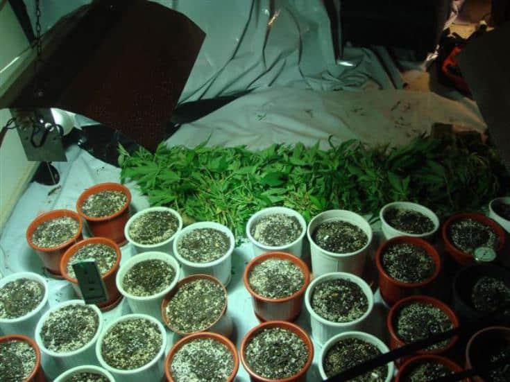 Tip-off leads to drug arrests
