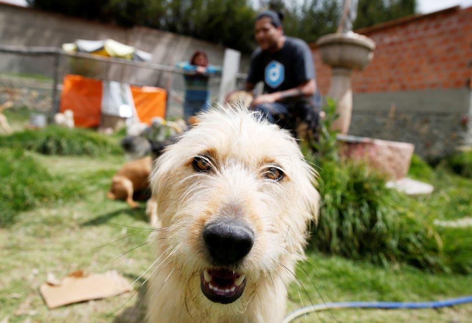 China to reclassify dogs as pets, not livestock, in wake of coronavirus