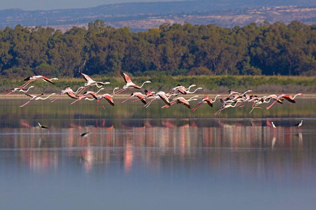 Birdlife raises concerns after new project planned near Akrotiri wetland