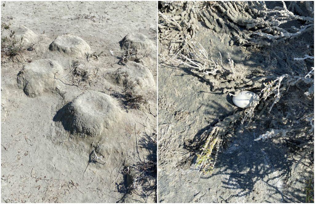 Flamingo Nest Mounds And Egg At Akrotiri Salt Lake © Christina Ieronymidou