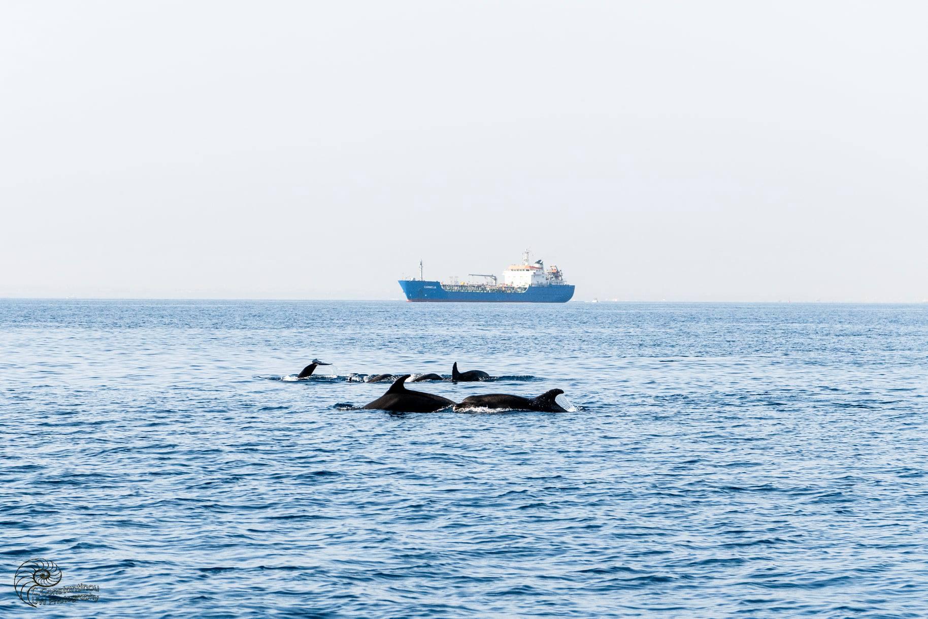 Dolphins 2(costas Constantinou)