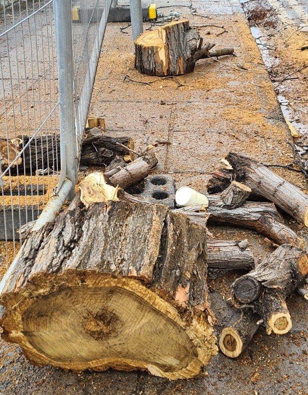 makariou cut trees