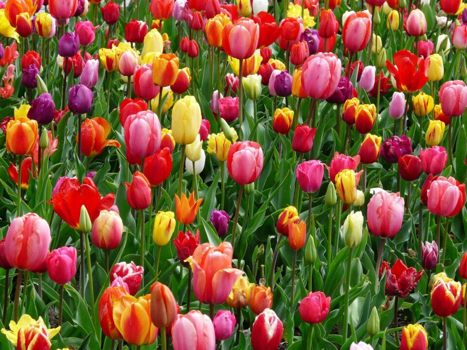 landscape nature outdoor blossom light plant 1150501 pxhere.com