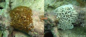 coral mortality