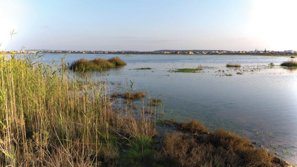 paralimni lake is a protected area (filippos georgiades)
