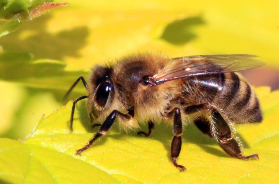 reuters bees netherlands