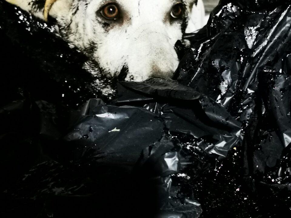 dogs tar