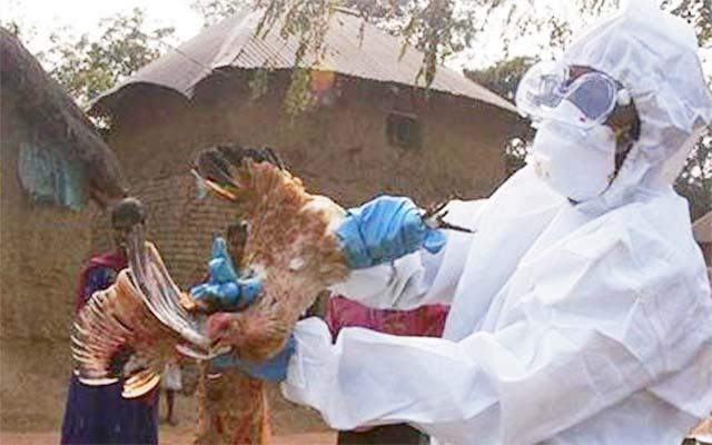india bird flu 210721 01