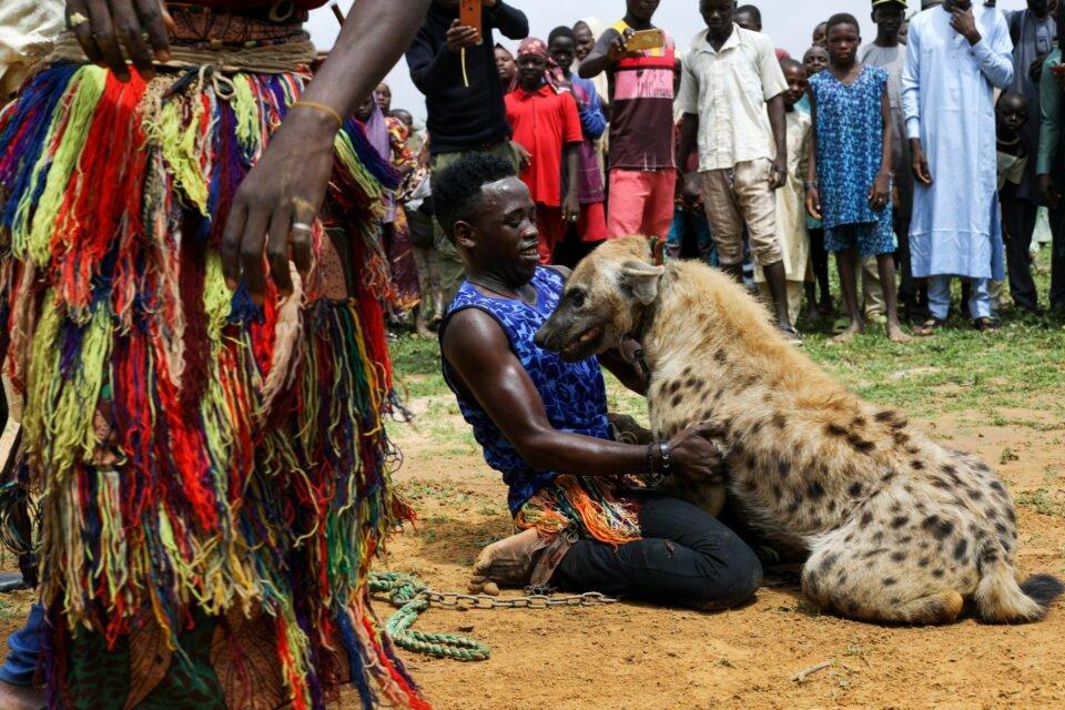 the wider image: nigeria's hyena men put maligned animals centre stage