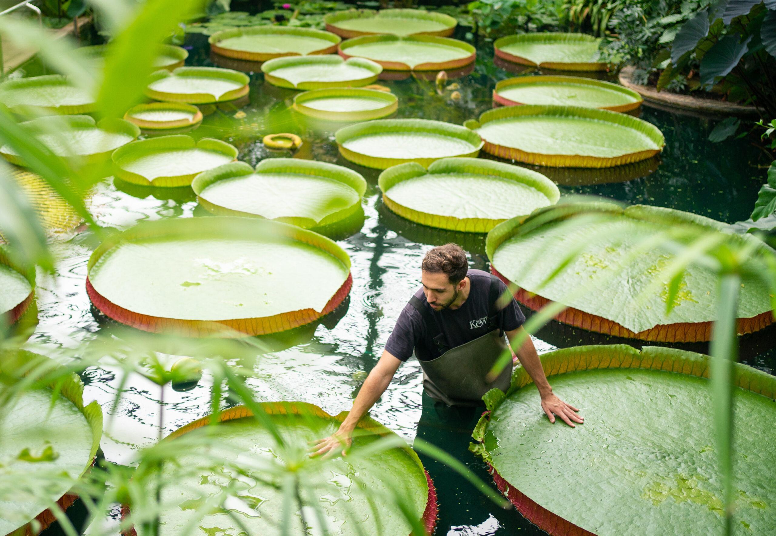 kew gardens guinness world record
